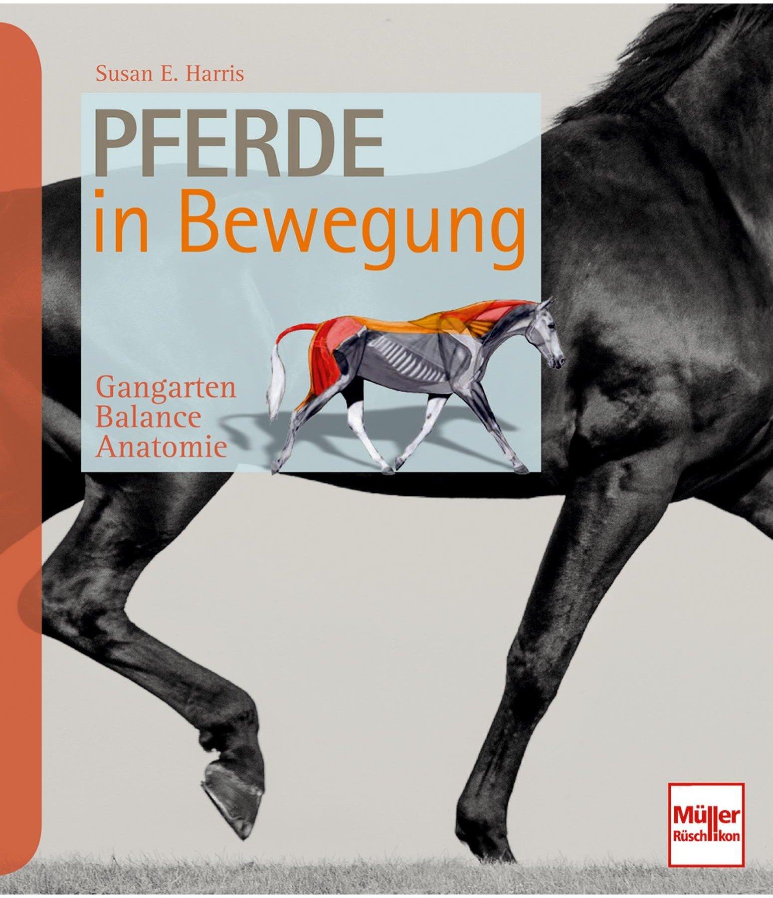Pferde in Bewegung - Gesundheit - Krämer Pferdesport Österreich